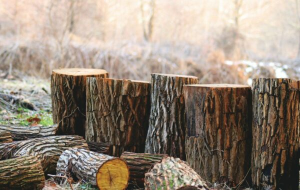 Chopped wooden logs lined up in a row